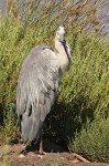 Parc ornithologique de Pont de Gau